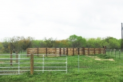 cattle pens 2