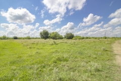 75-Acres-SARR-Oak-Trees-2