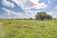 75-Acres-SARR-Oak-Trees