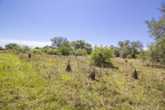 goliad-tract-3-pasture-1