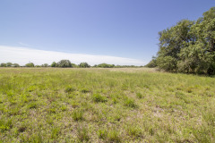 goliad-tract-4-pasture-2