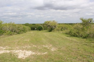 709+/- Acres For Sale – Bee County
