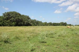 289 Acres For Sale – Beck Road Ranch