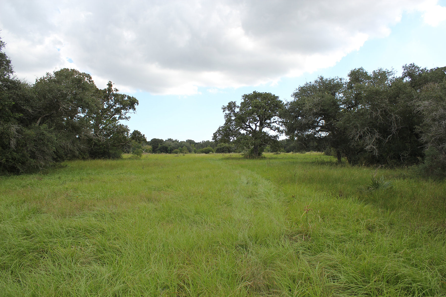 141 Acres For Sale – Francitas Ranch