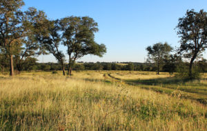 584 Acre Chisholm Creek Ranch – SOLD!!